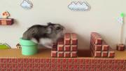 二货开箱99元买的一只仓鼠,到底是什么仓鼠怎么贵看看看看超萌